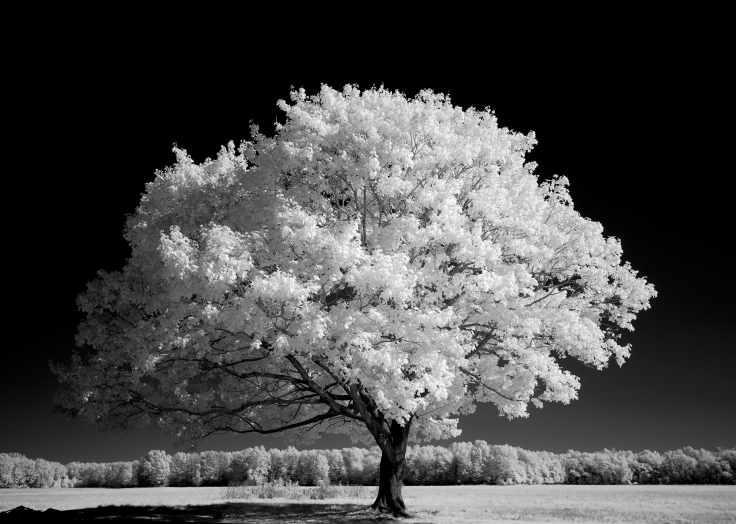 Blackwater.live - Baum im Sommer